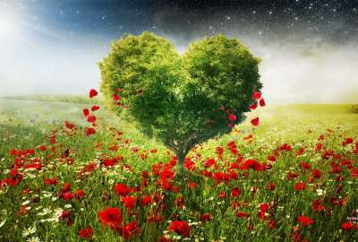 Green Love Heart Tree Poppies wallpaper