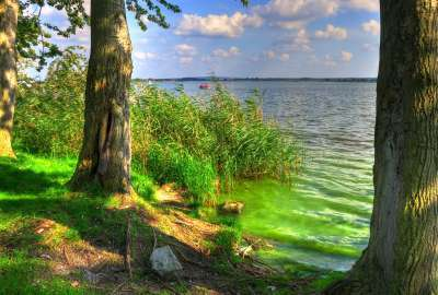 Green Shore With Trees wallpaper