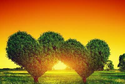 Heart Shaped Bush Sunset wallpaper