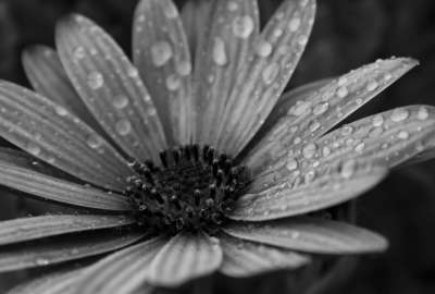 Macro Floral Black and White wallpaper