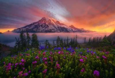 Mountaintop View Over Flowers wallpaper