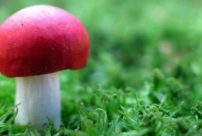 Mushroom Cloud HD wallpaper