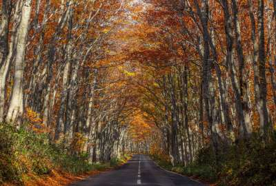Natural Autumn Road Tunnel wallpaper