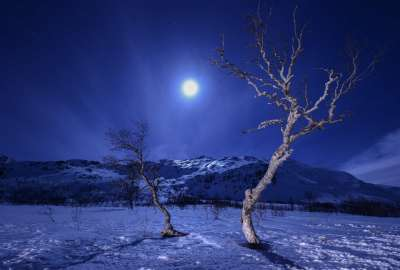 Night Moon View Trough Trees wallpaper