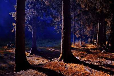 Night View Inside Forest wallpaper