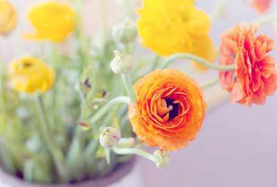Orange Yellow Flowers wallpaper