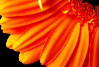 Pure Orange Flower 1080p wallpaper