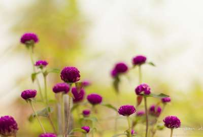 Purple Garden Flowers wallpaper