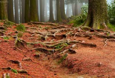 Red Dirt in Forest wallpaper