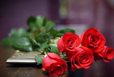 Red Rose 29843 wallpaper