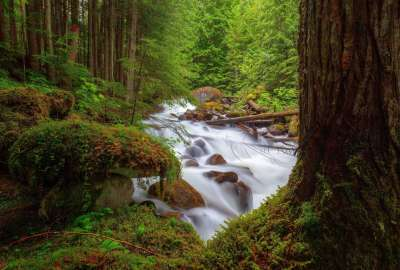 River in the Forest wallpaper