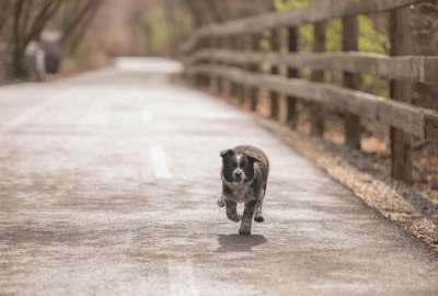 RUNNING PUPPY wallpaper