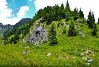 Small Mountain Trees Landscape wallpaper