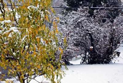 Snow on Autumn Leaves wallpaper