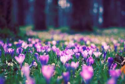 Spring Flower Park wallpaper