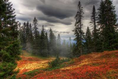 Storm Clouds Over Trees Landscape wallpaper