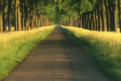 Straight Road Between Trees wallpaper