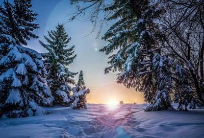 Sunrise Between Snow Trees wallpaper