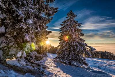 Sunset Between Trees With Snow wallpaper