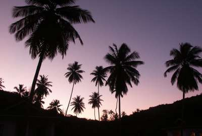 Sunset Palm Trees 1790 wallpaper