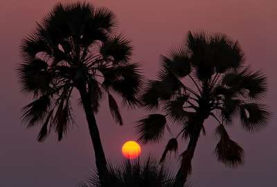 Sunset Seen Trough Palm Trees wallpaper