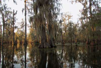 The Quiet Beauty of the Bayou Southern Louisiana wallpaper