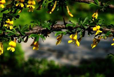 Tree Flowers Closeup wallpaper