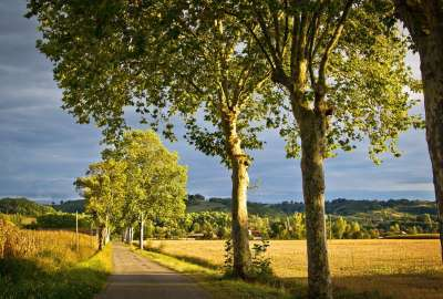 Tree Road Green Landscape wallpaper
