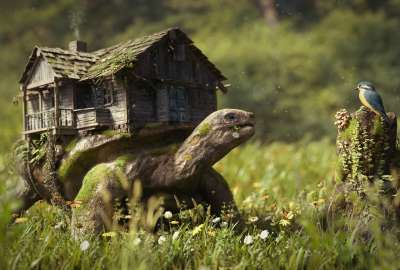 Turtle House wallpaper