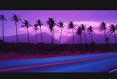 Violet Palms wallpaper