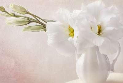 White Flowers Paiting wallpaper