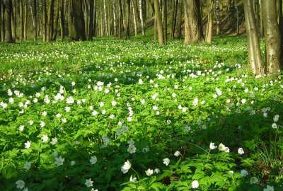 White WIld Flowers Spring wallpaper