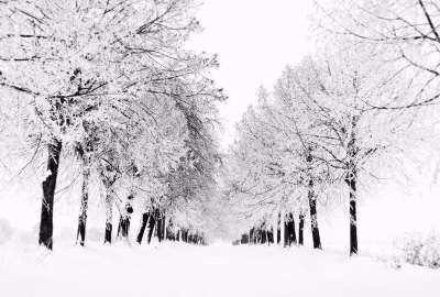 White Winter wallpaper
