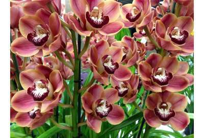 Wild Orchids S wallpaper