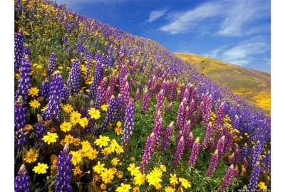 Wild Flowers Spring S wallpaper