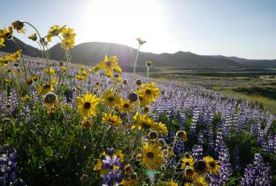 Wildflowers - Murrieta CA wallpaper