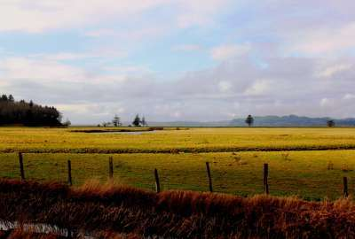 Willapa Bay Washington State wallpaper