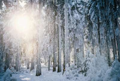 Winter Forest Landscape wallpaper