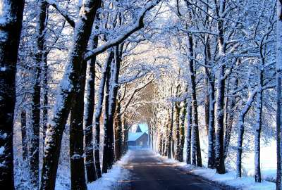 Winter Path With Trees Landscape wallpaper