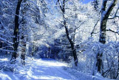 Winter Road Ice Trees wallpaper