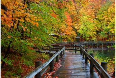 Wooden Dock Fall wallpaper