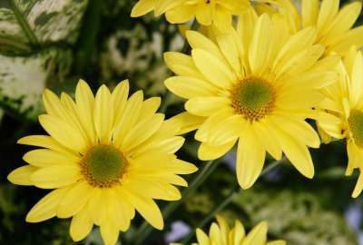 Yellow Color Flowers 28549 wallpaper