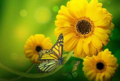 Yellow Flowers With Butterfly wallpaper