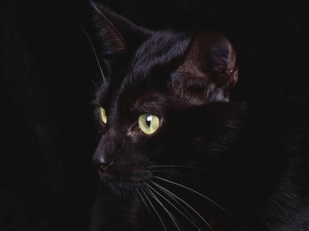 Black Cat In The Dark Wallpaper In 1024x768 Resolution