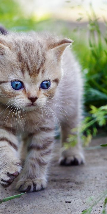 Cute Baby Cats Wallpaper In 360x720 Resolution