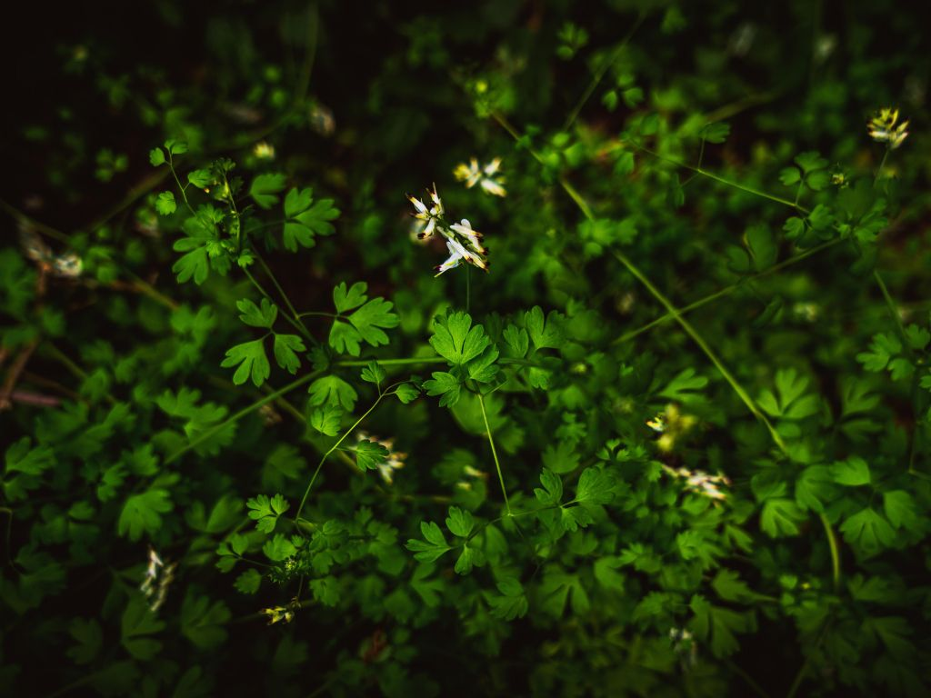 Green 4k Wallpapers For Your Desktop Or Mobile Screen Free And Easy To Download