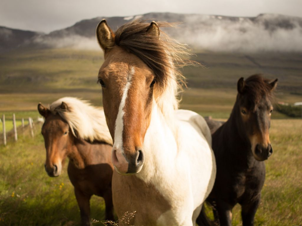 Horses 4k Wallpapers For Your Desktop Or Mobile Screen Free And Easy To Download