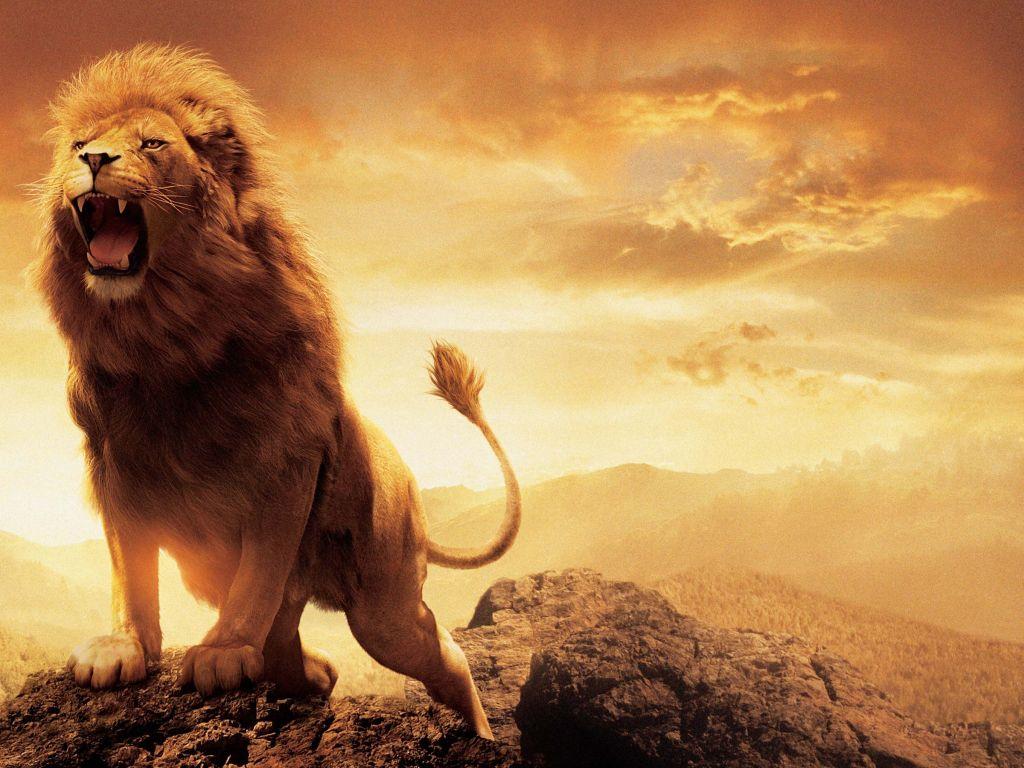 Narnia 4k wallpapers for your desktop or mobile screen - Lion 4k wallpaper for mobile ...